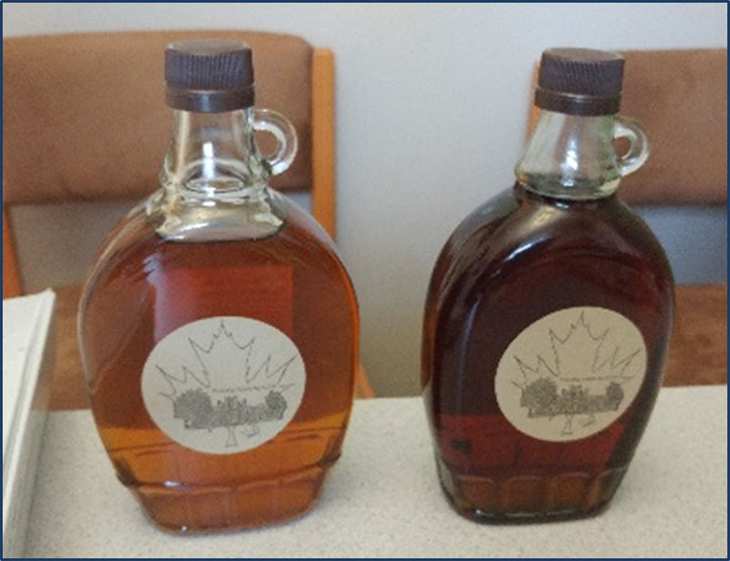 Figure 26: Maple syrup from maple trees in SJW