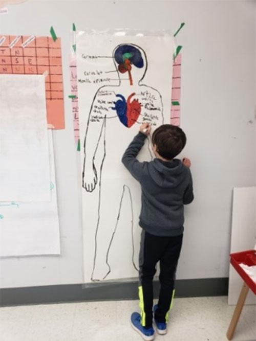 Figure 5 : Élève travaillant sur un projet scientifique sur le corps humain