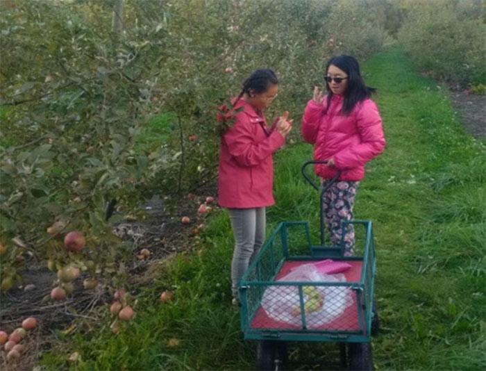 Élèves au verger cueillant des pommes